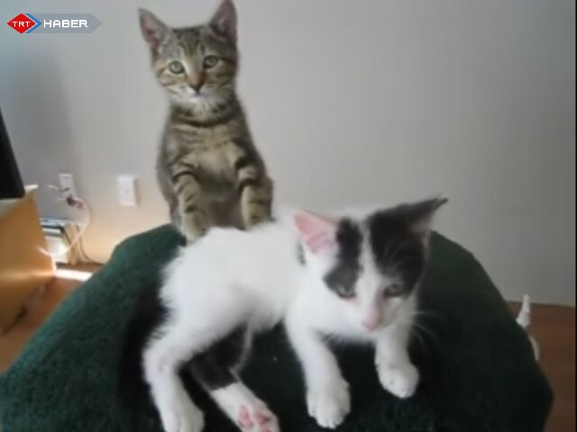Смотреть видео Наверно, это лучшее видео про котов.mp4 онлайн.