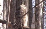 Kafasını 360 Derece Çeviren Baykuş
