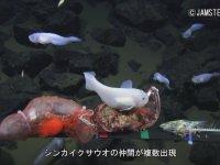 Mariana Çukuru'nda Görüntülenen Balıklar