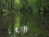 Huzur Garanti - Kuş ve Şırıl Şırıl Su Sesli Orman