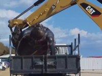 700 Kiloluk Deniz Kaplumbağasının Karaya Vurması
