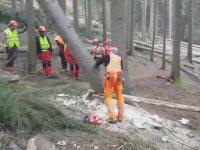Kazasız Belasız Ağaç Kesmenin En Kolay Yolu