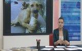 Sokak Hayvanları Konuşması  Ebru Birçak