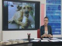 Sokak Hayvanları Konuşması - Ebru Birçak
