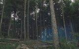 Kuzey İstanbul Kuzey Ormanları