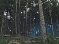 Kuzey: İstanbul Kuzey Ormanları