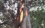 İçi Alev Dolu Ağacın Yanması