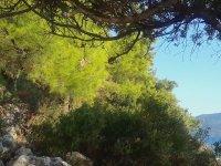 Takma Dişi Ağaçta Asılı Unutmak