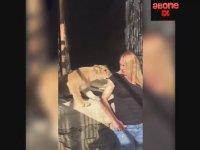 Yavru Aslanın Nagihan Karadere'ye Saldırması