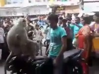 Trafikte Motorcu Rehin Alan Maymun - Hindistan
