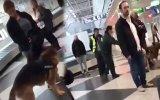 Türk Yolcuların Münih Havaalanı'nda Köpeklerle Aranması