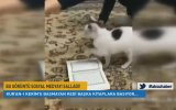 Kur'anı Kerim'e Basmayan Kedi