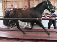 Koşu Bandında Koşan At