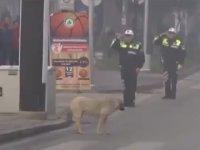 Ata'ya Saygı Duruşunda Bulunan Koca Yürekli Köpek