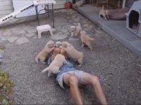 Bir Grup Köpeğin Saldırısına Uğrayan Adam