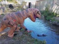 T-Rex Kostümü Giyip Timsahla Dalga Geçmek
