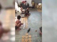 Hindistan'da Şeker Üretimi