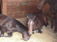 Huzur İçinde Gaz Çıkartıp, Horlayan Atlar
