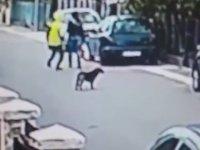 Cesur Köpeğin Kadını Kapkaççıdan Kurtarması