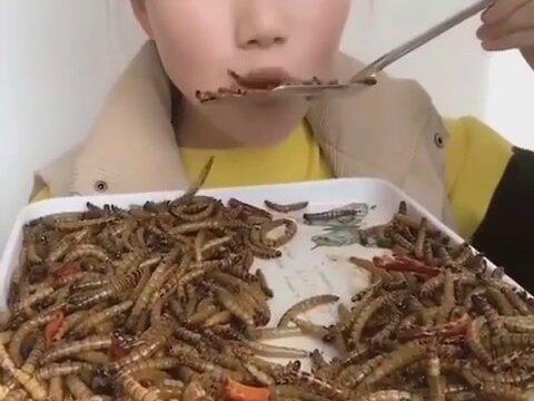 böcek yiyorlar ile ilgili görsel sonucu