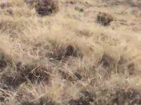 Tavşan Kaldıran Çoban (Küfür İçerir)