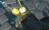 Deniz Kaplumbağasının 53 Milyon Dolarlık Kokain İle Yakalanması