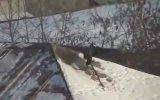 Kavanoz Kapağıyla Çatıda Kayak Yapan Karga