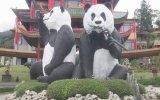 Sarayda Özenle Bakılan Çin'in Diplomat Pandaları