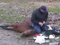 http://i1.imgiz.com/rshots/10161/can-cekisen-yarali-ata-yardim-eden-veteriner-edirne_10161815-2980_200x150.jpg
