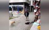 Yürek Yemiş Kedinin Köpeğe Saldırması  Trabzon