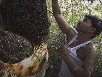 Arılardan Haz Alan Adam