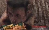 Atıştırmalık Seven Maymun