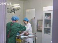 Çinli Bilim İnsanları Maymun Klonlaması