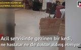 Hastanelerin Acil Servislerinde Bir Gece