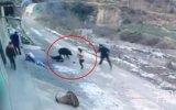 Yaban Domuzunun Kadını Öldürmesi  Çin