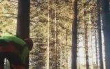 Tek Hamleyle Kesilen Ağaçların Domino Gibi Devrilmesi