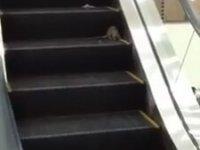 Yürüyen Merdivende İnsanlara Atlayan Fare