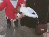 Güvercini Zorla Besleyen Çocuk