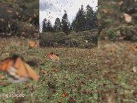 Binlerce Kelebeğinin Bir Aradaki Görüntüleri