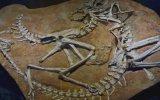 Dinozorlar Neden Kafalarını Geri Atarak Ölüyorlar