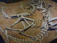 Dinozorlar Neden Kafalarını Geri Atarak Ölüyorlar?