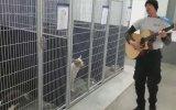 Barınaktaki Köpeklere Mini Konser Veren Adam