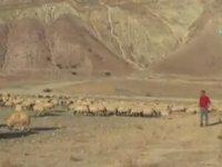 Koca Yürekli Kangal Köpeği