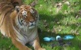Hayvanların Drone Kamerasına Verdiği Tepkiler