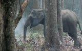 Filin Ulusal Parkta Duman Çekmesi