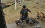 Yavru Köpeklerin Arasında Kalan Çocuğun Dramı