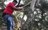 Acemi Tarzanın Dengesini Kaybedip Yere Çakılması