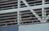 Gemilerde Taşınırken Eziyet Edilen Hayvanlar