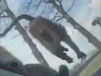 Safari Yapan Turistlerin Aracının İçine İşeyen Maymun