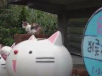 Tayvan'da Gün Yüzüne Çıkan Kedi Köyü